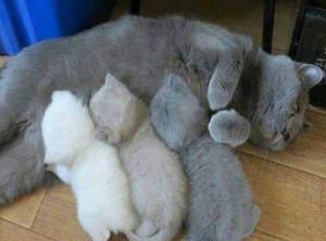 i gatti hanno più diritti dei bambini